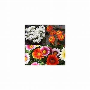 Jardiniere Fleurie Plein Soleil : jardini re de plein soleil lot de 6 plantes et jardins ~ Melissatoandfro.com Idées de Décoration