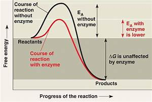 Unlabelled Diagram Of Enzyme Reaction