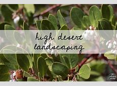 The 25+ best ideas about High Desert Landscaping on