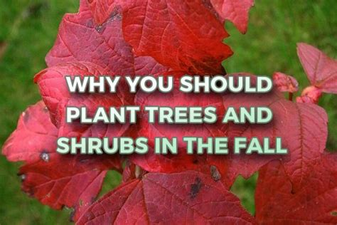 what can you plant in the fall home evergreen of johnson city tn