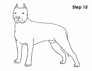 How to Draw a Dog (Pit Bull)