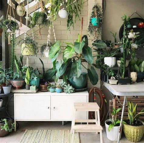 urban jungle plants vegetal green mood jungle decorations room  plants plants