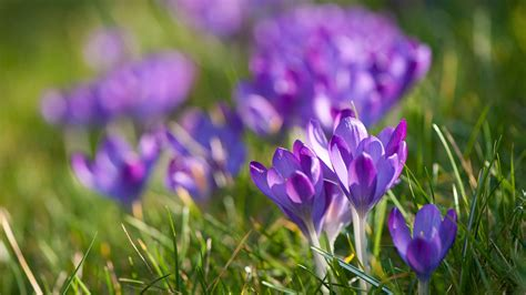 the best way to plant bulbs in the grass home the