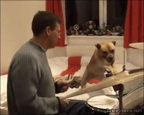 awesome drum animated gif images   animations
