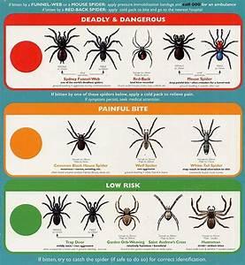 Spider Identification Chart California Spider Identification Types Of Spiders Wolfspider Org