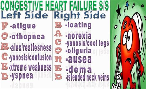 Congestive Heart Failure Signs And Symptoms Mnemonic  The. Glad Pc Signs Of Stroke. 14 December Signs Of Stroke. Town Signs Of Stroke. Food Signs. Buffet Signs Of Stroke. Illustration Signs. Imthatgirlfriend Signs. Girl Signs Of Stroke
