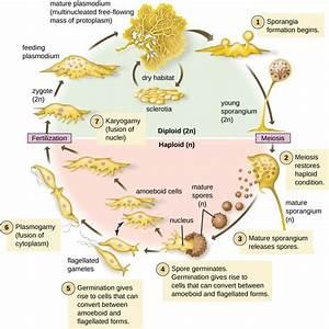 5.1 Unicellular Eukaryotic Parasites – Microbiology ...