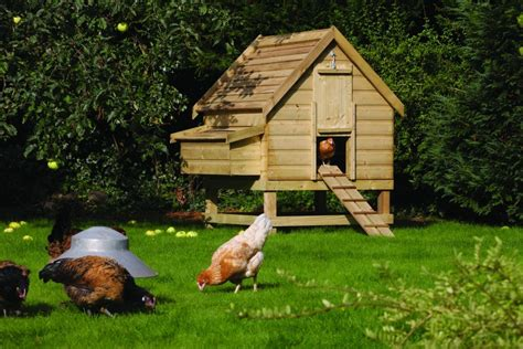 chicken houses rowlinson large chicken coop review for 6 hens keeping chickens uk