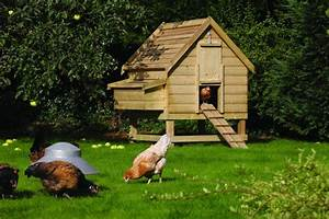 Rowlinson Large Chicken Coop Review  For 6 Hens