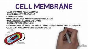 Cell Wall Vs Cell Membrane Final Video