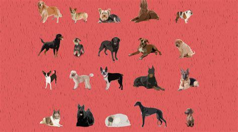 americas top dog    popular breeds
