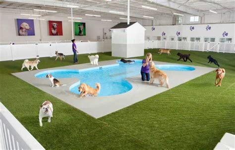 Pet Pools, Plastic Pet Pools, Inground Pet Pools