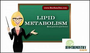 Lipid Metabolism  Smart Guide And Notes