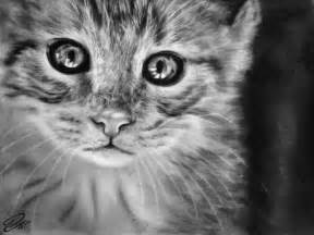 cat drawings cat drawing by hoydadi on deviantart