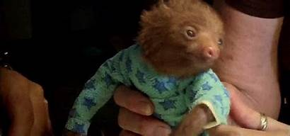 Sloth Kristen Bell Mtv Planet Animal Sure