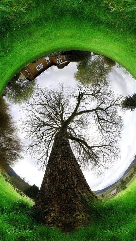 fisheye effect grass photo manipulation trees wallpaper