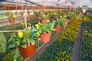 Pflanzen Bewässern Mit Plastikflasche : pflanzen und bew sserungssysteme so installieren sie eine urlaubsbew sserung ~ Frokenaadalensverden.com Haus und Dekorationen