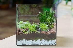 Pflanzen Für Terrarium : sukkulenten im terrarium halten pflanz und pflegetipps ~ Orissabook.com Haus und Dekorationen