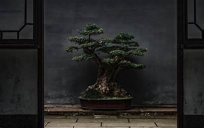 Bonsai Tree Plant 4k Door Background Decorative