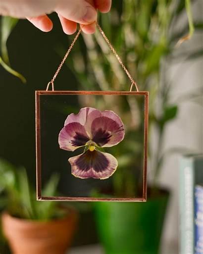 Flower Pressed Murphy Karly Stunning Flowers Von