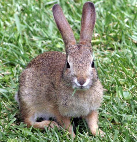 information  starting rabbit farming  india