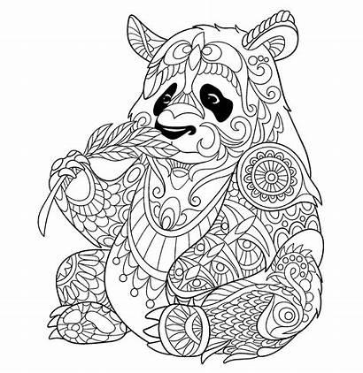 Panda Coloring Bamboo Eating Pandas Pages Adult
