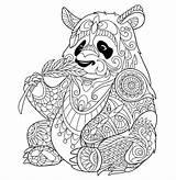 Panda Coloring Bamboo Eating Pandas Pages Adult Animals Shoot sketch template