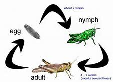 High quality images for venus fly trap diagram 7desktop1wall hd wallpapers venus fly trap diagram ccuart Choice Image