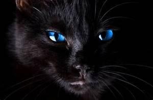 Blue Eyed Black Kitten   www.imgkid.com - The Image Kid ...