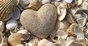 Besteht Sand Aus Muscheln : muschelbilder basteln kreative anregungen freizeit ~ Kayakingforconservation.com Haus und Dekorationen