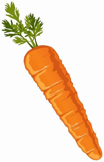 Carrot Clip Clipart Nose Background Carrots Transparent