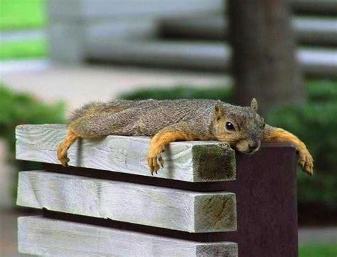 chillaxing animals mammals squirrels cute squirrel