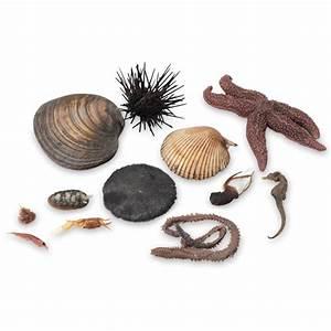 Animals of the Seashore