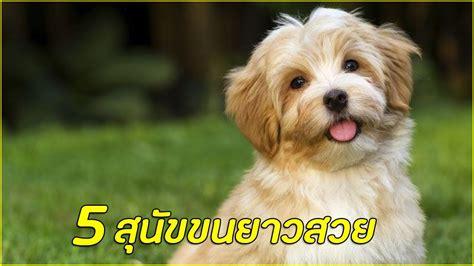 5 สายพันธุ์ สุนัขขนยาวสวย !!! - YouTube