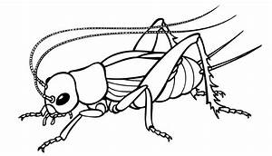 Clip Art Insects - ClipArt Best