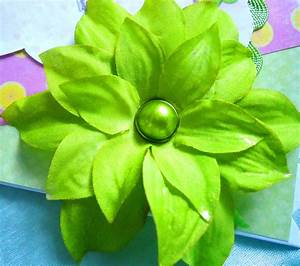 Pictures Of Green Flowers - Beautiful Flowers