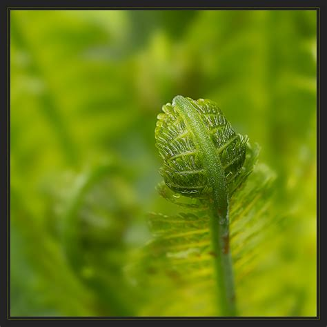Die Farbe Grün by Gr 252 N Ist Die Farbe Der Hoffnung Foto Bild Natur Makros