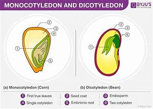 5 Differences Between Monocots And Dicots