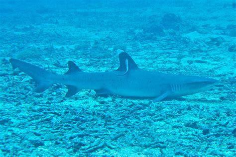 Gili Trawangan Dive Gili Trawangan Diving Virtourist Gilis Islands