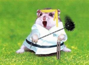 All Funny,Cute,Cool and Amazing Animals: Funny Hamster ...