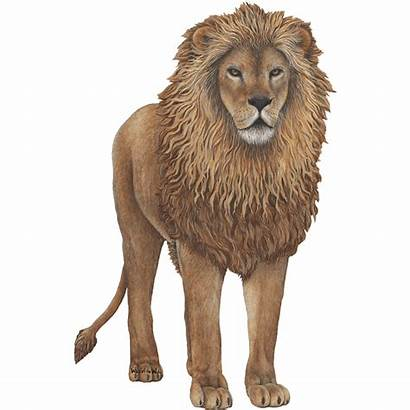 Lion Jungle Sticker Animals Giant Animal Decal