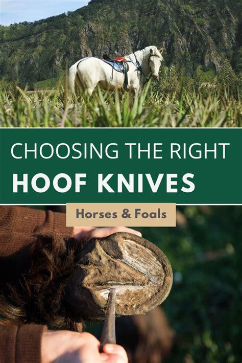 knife hoof horse looking market