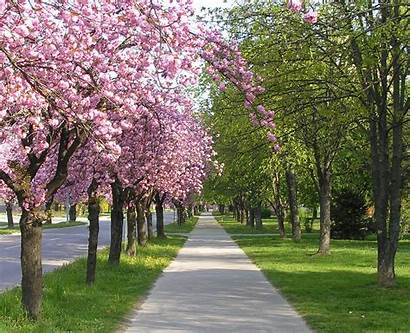 Spring Outside Fedevel Its Pcb Advanced Layout