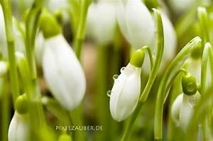 Ranken Blumen Garten : pflanzen in nanopics indisches blumenrohr canna i beliebte pflanzen erfahrungen ~ Whattoseeinmadrid.com Haus und Dekorationen