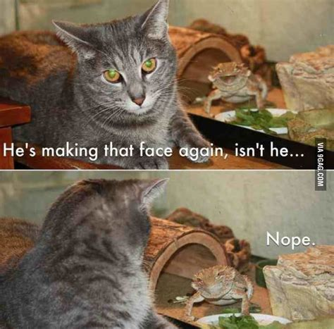 Hehehe Lizard Meme - motherf king bearded dragon antics hehehe pinterest to find out look at and too cute