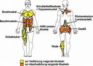 menschliche anatomie bauch