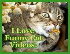Funny Cat Videos Colle...