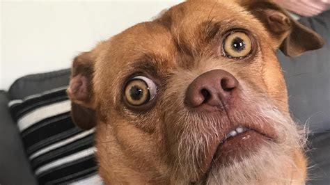 bacon el perro extremadamente preocupado es el meme viral