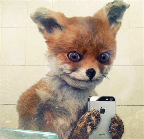 Stoned Fox Meme - stoned fox meme is russia s best export next to vodka gallery new media rockstars