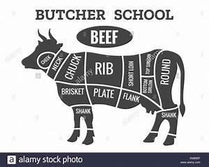 Cow Butcher Diagram  Cutting Beef Meat Or Steak Cuts